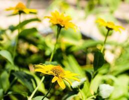 groupe de fleurs jaunes photo