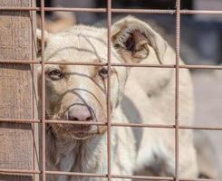 chien blanc derrière une clôture