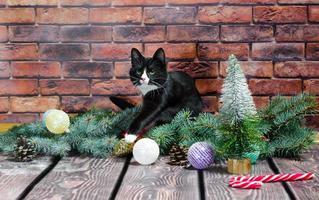 chaton noir et blanc avec des décorations de noël