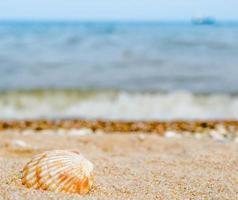 coquille sur la plage photo