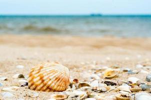 beaucoup de coquillages sur une plage photo