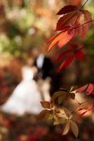 feuilles de raisins rouges sauvages en automne