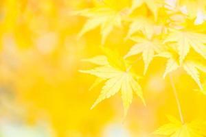 feuille d'érable jaune photo