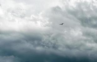 oiseau solitaire contre un ciel orageux