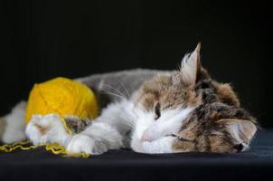 chat couché avec du fil