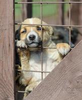 Chiot collant les pattes hors de la clôture