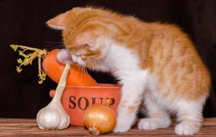 tabby orange avec des ingrédients de la soupe