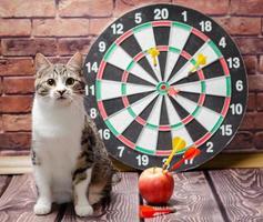chat avec fléchettes et pomme