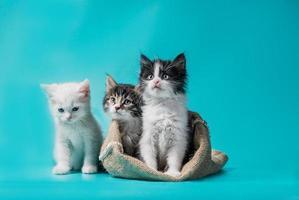 trois chats avec un sac