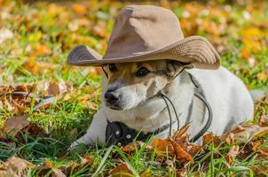 chien dans un chapeau