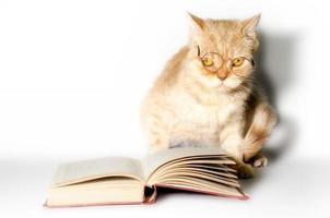chat avec des lunettes et un livre photo