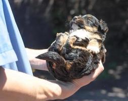 vétérinaire tenant un chiot