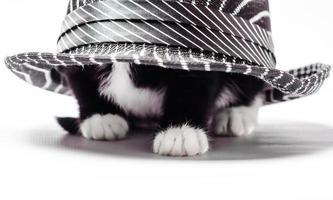 chat blanc et noir sous un chapeau