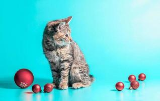 chaton avec des boules de noël