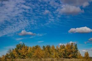 arbres d'automne et ciel bleu photo