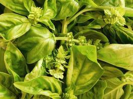 plantes à feuilles vertes dans un jardin photo