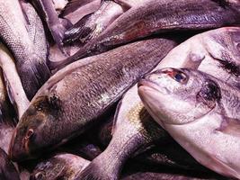 gros plan, de, tas de poisson photo