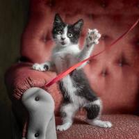 chaton jouant avec un ruban sur une chaise rouge photo
