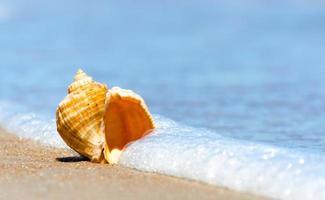 coquillage au bord de la mer photo
