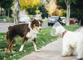 chien saluant un autre chien sur le trottoir