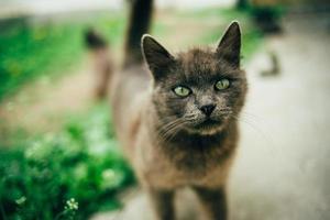 beau chat dehors photo