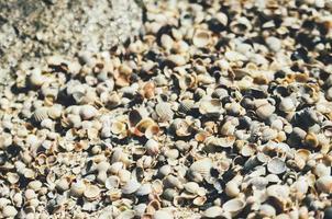 texture de pile de coquillage photo