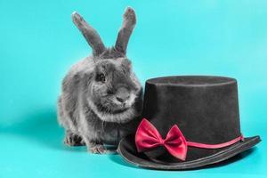 lapin gris avec chapeau photo