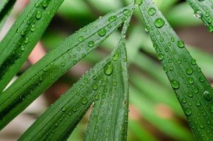 feuille verte avec des gouttes de rosée dessus photo