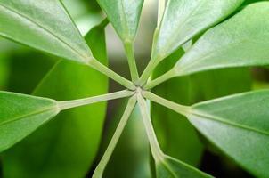 joint de tige d'une plante photo