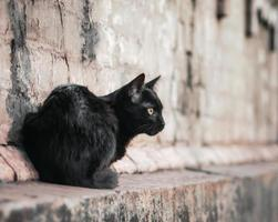 chat noir sur mur de briques photo