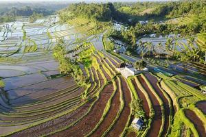 Vue aérienne des rizières en terrasses de Bali photo