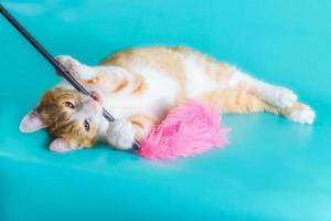 chaton jouant avec des plumes veulent