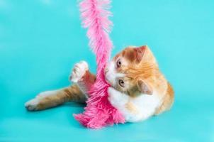 chaton jouant avec un boa de plumes