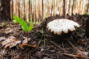 champignon dans une forêt photo