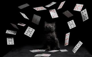 chat noir et cartes à jouer photo