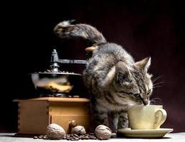 chat buvant dans une tasse à café avec moulin à café