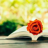 rose sur livre photo