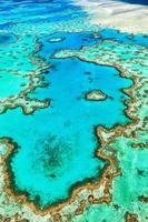 Grande barrière de corail dans le Queensland en Australie photo