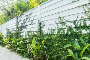 mur blanc et plantes photo