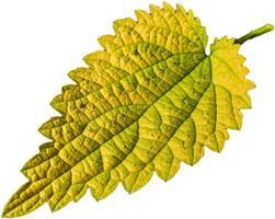 feuille colorée aux couleurs d'automne photo