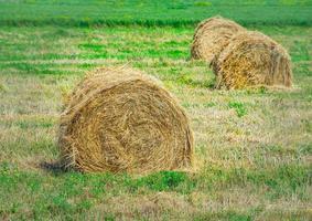 paysage d'un champ avec des balles de foin photo