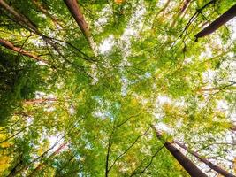 grands arbres dans la forêt, vue d'ange bas photo
