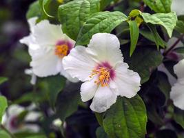 Gros plan de fleurs blanches sur un arbuste orange simulé photo