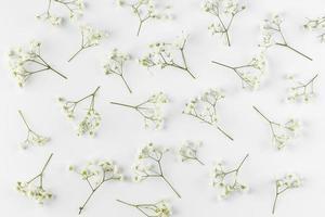 fleurs à plat sur fond blanc photo