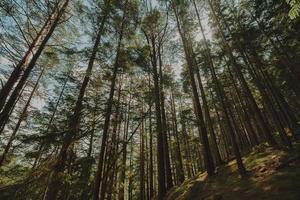 vue de dessous d'un groupe d'arbres photo