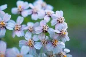 belles fleurs blanches dans le jardin au printemps