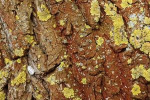 écorce d'un arbre. texture en bois naturel. photo