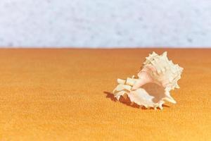 une coquille avec une mer floue sur le fond. photo