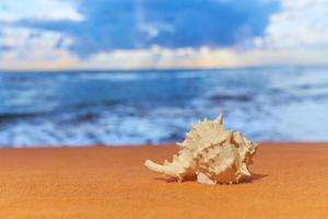une coquille au soleil avec une mer floue sur le fond. photo