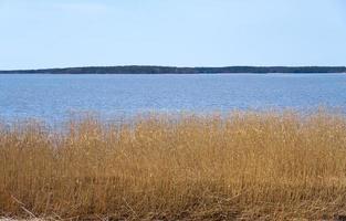 plantes sèches sur la côte de la mer Baltique en Finlande au printemps. photo